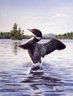 """Loon Display""  by Maureen McCarthy"