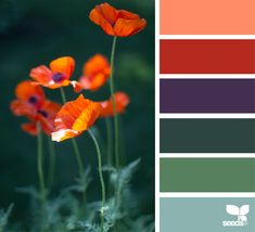 most recent photos unique color palette design seeds style career : We all discover how important color is design. However, with plenty of the current design trends, creating interesting and cohesive color palettes has. Hue Color, Colour Pallete, Colour Schemes, Color Combos, Color Palettes, Color Mix, What Are Colours, Unique Colors, Flora Design