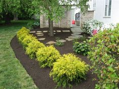 landscaping with golden mop cypress - Google Search