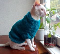 Blue cat sweater Sphynx clothes hand made blue sweater for cat with heart…