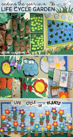 Read about how we turned our hallway into a life cycle garden and displayed all of our life cycle activities during a Spring Open House. Students learned and wrote about the life cycles of butterflies, frogs, and plants! Kindergarten Science, Science Classroom, Teaching Science, Life Science, Teaching Ideas, Hallway Displays, Classroom Displays, Classroom Ideas, Butterfly Kids