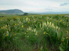 Growiser -- wiltdflower institute on Grande Ronde Overlook, outside La Grande.  Visit on way to Wallowas.