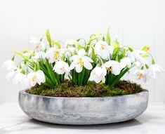 Misa betonowa idealna ozdoba do domu, która może posłużyć również jako donica... Plants, Plant, Planting, Planets