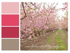 Peach Orchard Blooms Palette, pink, light pink, strawberry pink