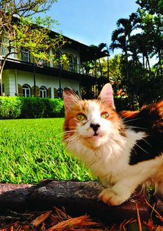 Where cats rule: A travel guide for feline fans