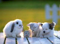 bunny hamster kitten puppy