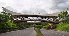 Guadua Bamboo Bridge in Colombia  architect Simon Velez