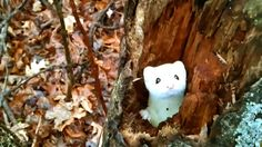 A man encountered THE MOST ADORABLE creature while walking through the woods.