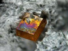 Joaquinite-(Ce), Dallas Gem Mine, New Idria District, San Benito Co., California, USA. Fov 4 mm. Copyright: Stephan Wolfsried