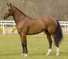 The Sport Horse Show and Breed Database - Action Breaker