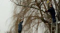 В Олевську рятувальники зрізали аварійні дерева, які могли упасти на будинок | Вголос.zt