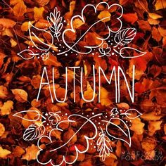 "pumpkin-flavoured: "" perfect-life-of-roses: "" Autumn is finally coming..!  "" x halloween / autumn blog x """