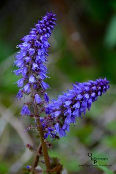 Wild Purple - Photograph at BetterPhoto.com