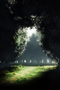 Portal trees