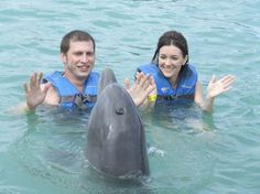 Top 25 Things to Do in the Caribbean in 2014: #3. Swim with dolphins