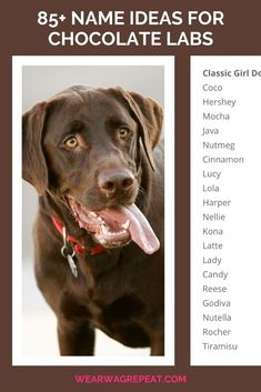 Need name ideas for a chocolate labrador? Since Labradors are the most popular dogs in America for 29 years running, there are tons of pet parents naming their new labradors every year. As a chocolate labrador mom I hear so many great suggestions for unique names for chocolate lab boys and girls. If you're getting a new labrador puppy or rescue lab, you need to see these dog name ideas! Unique Pets, Unique Names, Chocolate Lab Puppies, Chocolate Labs, Girl Dog Names, Puppy Names, Labrador Names, Labrador Retrievers, Girl And Dog