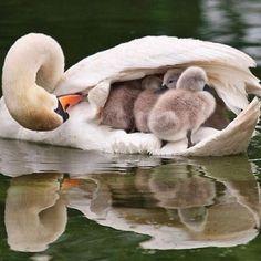 Ducky so cute