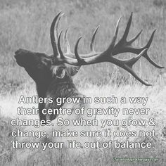 Antlers grow in such a way their centre of gravity never changes. So when you grow and change, make sure it does not throw your life out of balance.