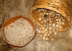 Native American Recipes: Hickory Nut & Corn Pudding _ Historically, this pudding was made by crushing Flour or Flint corn and hickory nut meats into meal (using a mortar and pestle), which was then mixed with water, cooked until it was a thick pudding, and seasoned with maple sugar. _ Source: http://voices.yahoo.com/native-american-recipes-hickory-nut-corn-pudding-8720201.html?cat=37