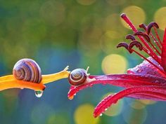 The fascinating miniature world of snails photographed by Vyacheslav Mishchenko