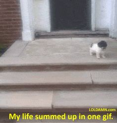 My life summed up in one picture. #gif