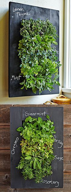 The Grovert Living Wall Planter in the chalkboard frame kit is the ideal indoor planter to have. Write notes on the frame while watering your vertical garden! Herb Garden, Garden Plants, Indoor Plants, House Plants, Balcony Garden, Garden Art, Hanging Wall Planters, Pot Jardin, Deco Nature