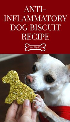 Anti-Inflammatory Dog Biscuit Recipe Homemade Dog Treats Gluten-Free Dog Treat Recipe DIY Dog Treats - Tap the pin for the most adorable pawtastic fur baby apparel! You'll love the dog clothes and cat clothes! Healthy Dog Biscuit Recipe, Dog Biscuit Recipes, Dog Treat Recipes, Dog Food Recipes, Recipe Treats, Puppy Treats, Diy Dog Treats, Healthy Dog Treats, Dog Treats Grain Free