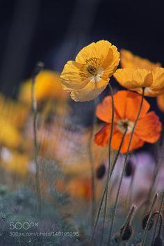 Spring Up by azul_momento #nature #photooftheday #amazing #picoftheday