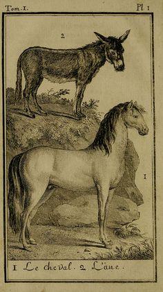 """""""Donkey & Horse"""" Histoire naturelle, générale et particulière, avec la description du Cabinet du roi. Tome I.  Paris,De l'Imprimerie royale,1750-1804.  biodiversitylibrary.org/page/25696864"""