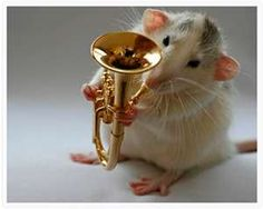 tiny euphonium rat! <3    I want one!!