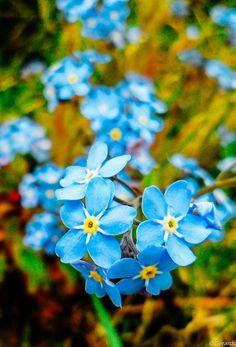 photosbygerardo:  something blue
