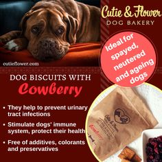 Flower Dog, Dog Bakery, Urinary Tract Infection, Dog Biscuits, Health, Dogs, Health Care, Pet Dogs, Doggies