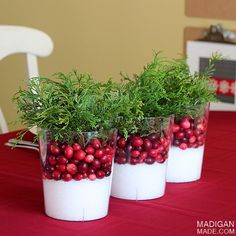 Pretty and simple decor. Epsom Salt, cranberries, and green in glass vase