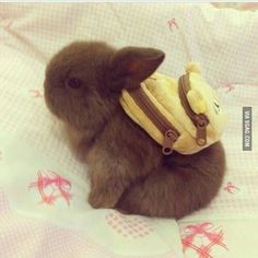 A bunny with a backpack ^.^