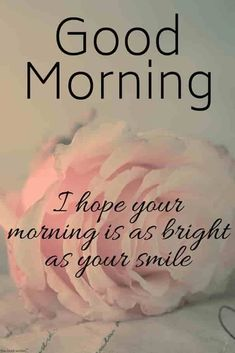Best good morning messages and images with pink rose. Good Morning Greeting Cards, Good Morning Wishes Quotes, Morning Quotes Images, Good Morning Beautiful Quotes, Good Morning Images Hd, Good Morning Texts, Good Morning Inspirational Quotes, Good Morning Love, Good Morning Greetings
