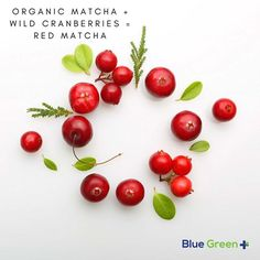We bring to you pure, natural superfoods full of antioxidants that truly works so you can discover the many benefits of Matcha, Moringa and Wildberries. Fresco, Best Probiotic, Organic Matcha, Matcha Benefits, Organic Superfoods, Coco, Blue Green, Berries, Pure Products