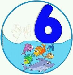 6 peces