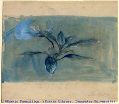 John Ruskin I Rhododendron Leaves I ca. 1854-58