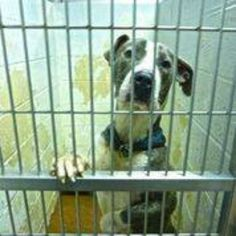 After young dog's owner died and incompatible foster home, Utley has given up