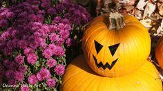 Pumpkin Face Scary Vinyl Decal by deannabachart