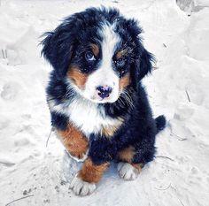 Hotels-live.com/cartes-virtuelles #MGWV #F4F #RT Follow @animalsfocus for more awesome animal photos! @animalsfocus. Photo Credit: @wafflenugget. Tag: #lifeonourplanet by lifeonourplanet https://www.instagram.com/p/BAXcglbCSdo/