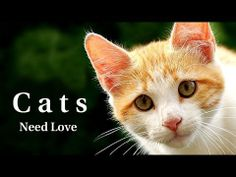Do cats need love? Cats and kittens need your attention, your care and your love. But most of all, they need you. This is a video with a message. Cats need you.  Adopt one, love one.  Best watched in Full Screen HD with Sound On.