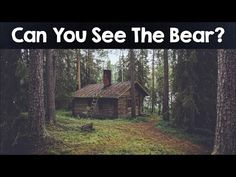 Nobody Can See All The Hidden Animals । Optical Illusions : Video Clips From The Coolest One