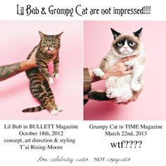 Cat Burglars: Did Time Magazine Rip Off Our Lil Bub Photo Shoot or What?