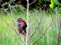 Just a bird... Springwater Trail. Gresham, Oregon. May 22, 2012. Photo of the Day, May 24, 2012.