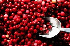Spiced Cranberry Sauce | BrainHQ from Posit Science