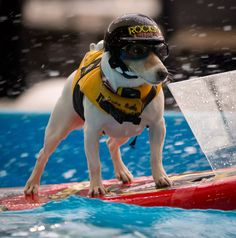 Does anyone know of a dog that actually can do this?  boatersoutlet.com