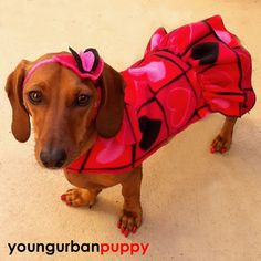 My dachshund would look great...queen of hearts.