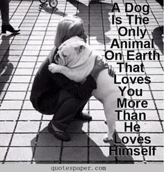 Dog is our best friend | #Quotes About Life
