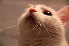 """""""Kittens carry tickles on their whiskers."""" --Author Unknown"""